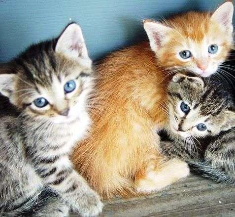 Shopping fará evento exclusivo para gatos