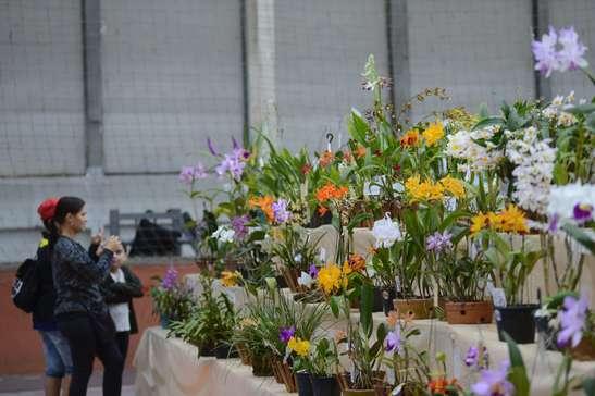 Sesi sedia a 46ª Exposição de Orquídeas