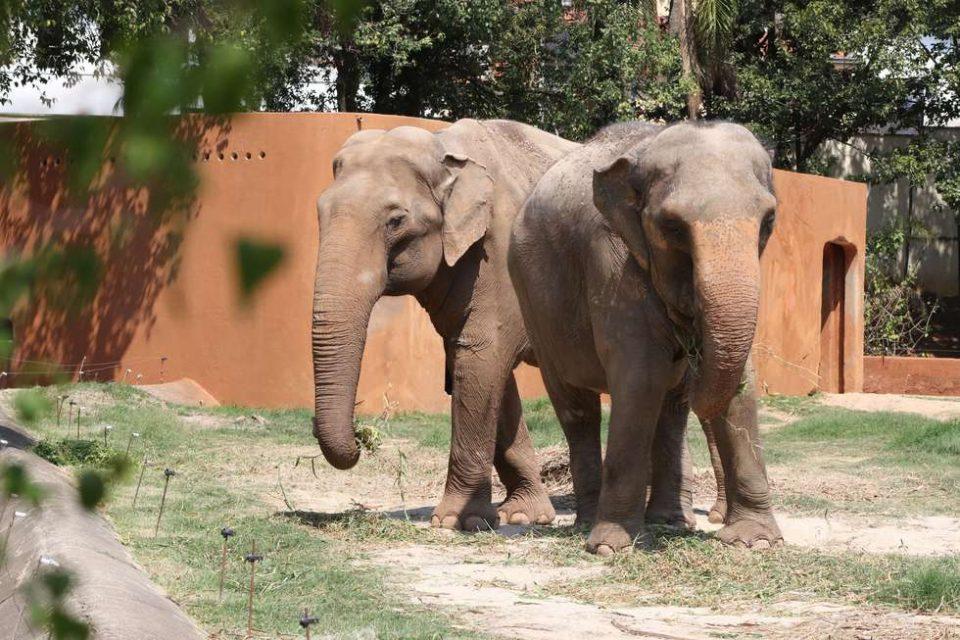 Zoo Quinzinho é lar de diversos animais idosos
