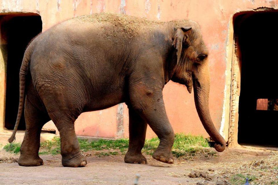 Visitas especiais em janeiro vão mostrar os animais idosos do zoo