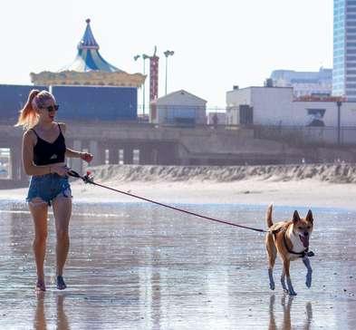 Passear com seu cão faz bem pra saúde