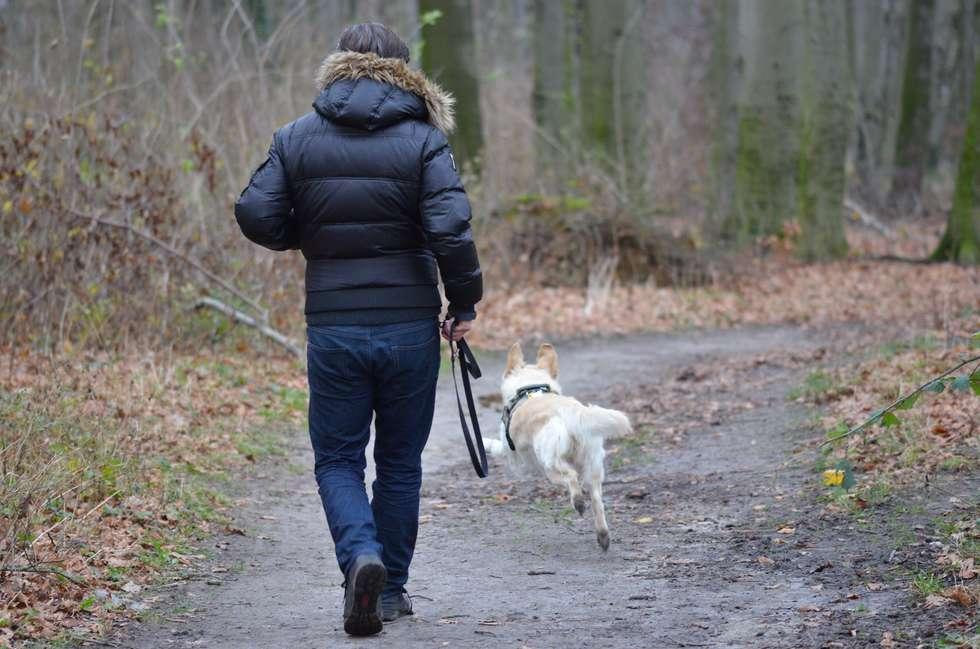 Passear com cão faz bem pra saúde