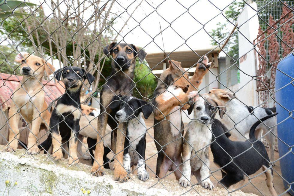 Shopping receberá cães hoje e amanhã