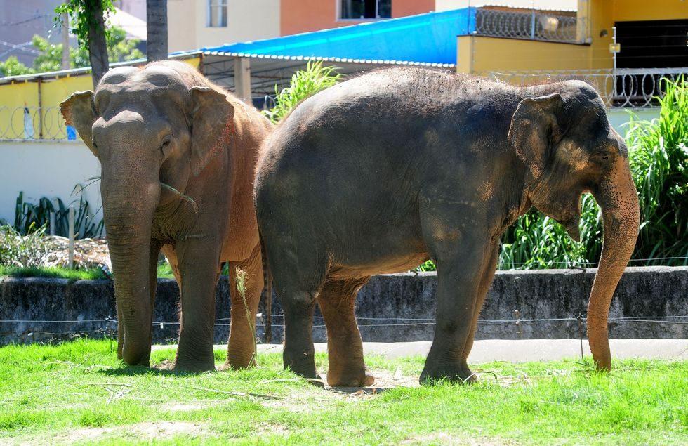 Zoo faz ação de Páscoa para animais