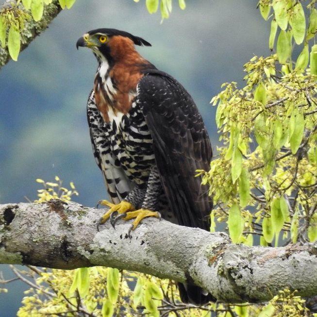 Na trilha dos observadores de aves