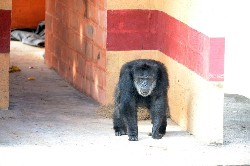 No Santuário: Black sai da quarentena e recebe visitas