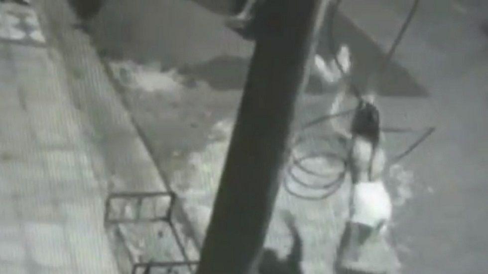 MP investiga caso de gato jogado contra rottweiler em Sorocaba
