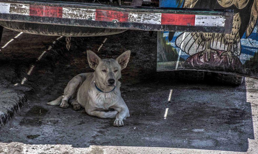 País tem 3,9 milhões de animais em situação de vulnerabilidade