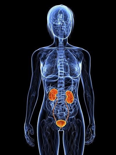 Anatomia feminina aumenta predisposição à infecção urinária