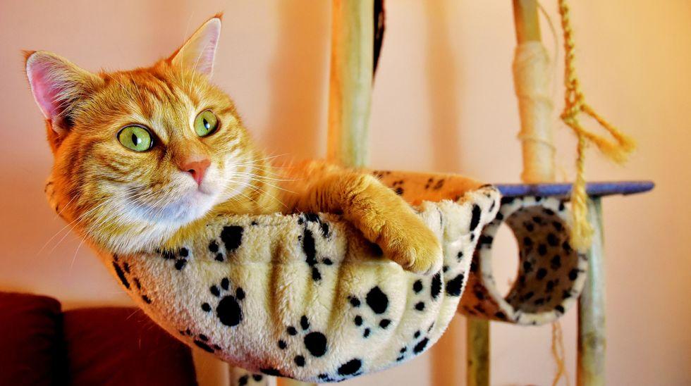 Gatos precisam de cuidados específicos