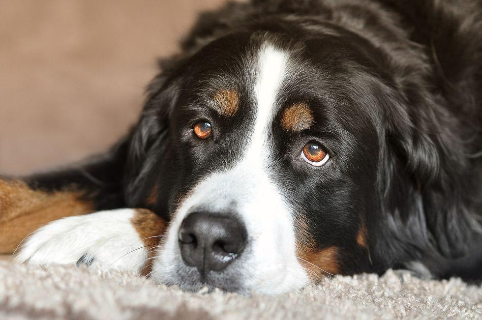 Seu cachorro é feliz?
