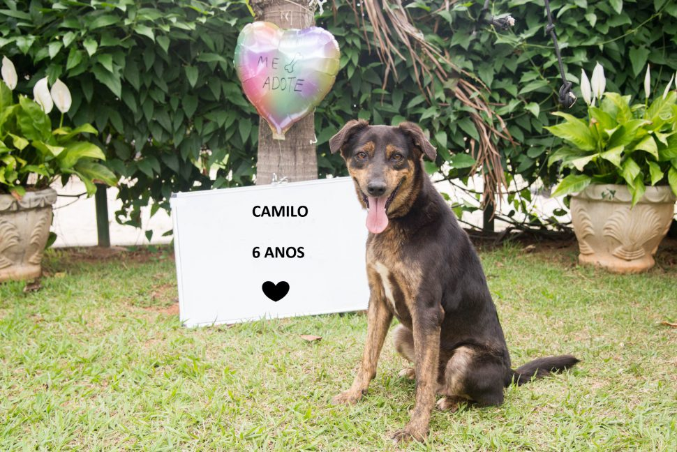 Cachorro para adoção no Abrigo Municipal