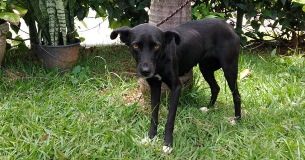 Dois cães são resgatados de imóvel abandonado em Sorocaba