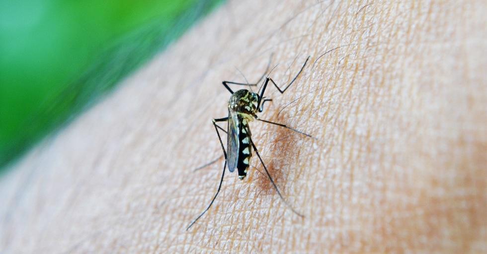 Sorocaba tem 86 novos casos de dengue no intervalo de 10 dias
