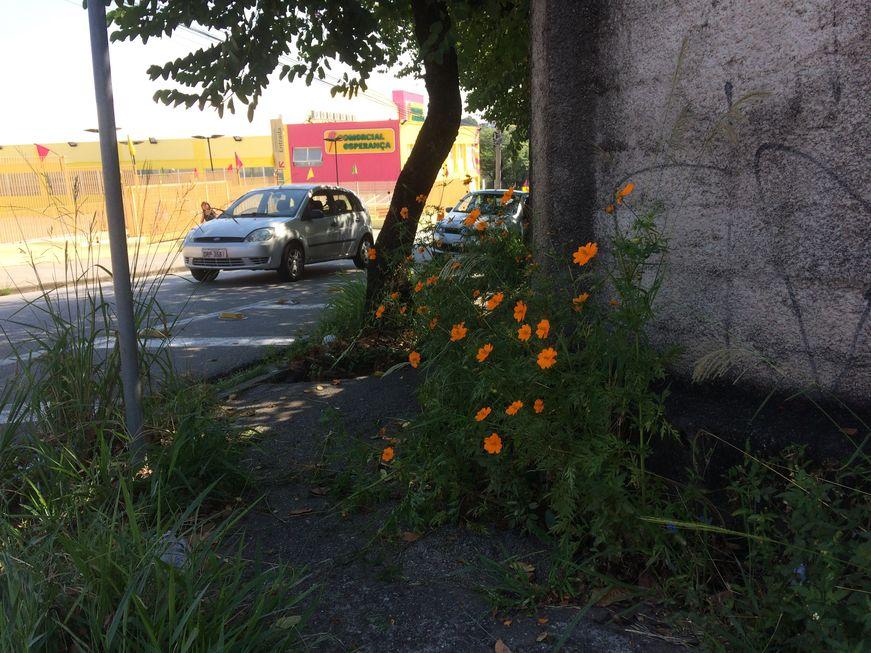Flores na calçada