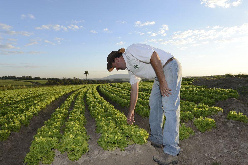 Agricultores perdem até 50% da produção
