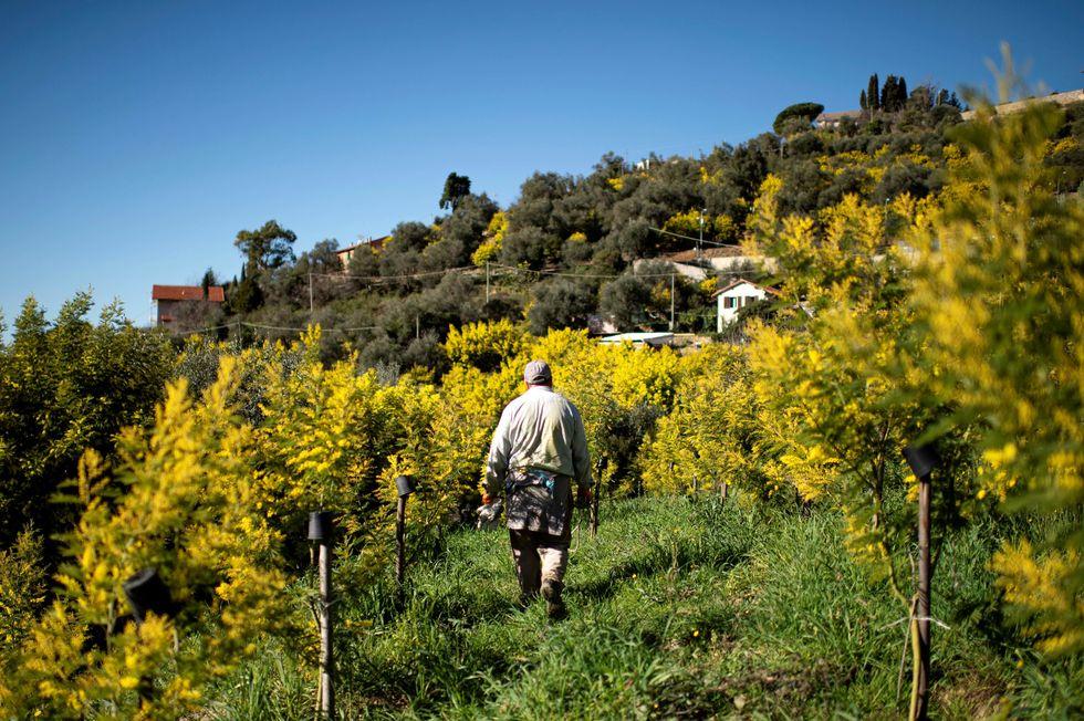 Sem trabalhadores, Itália perde plantações