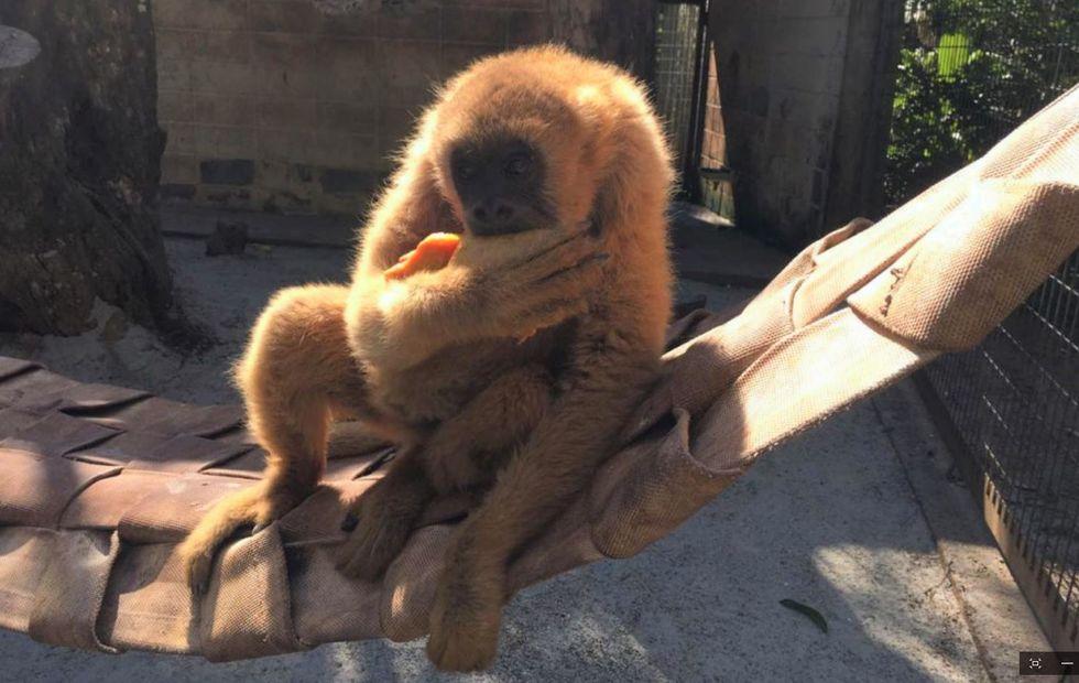 Sorocaba participa do 'Cada macaco no seu galho'