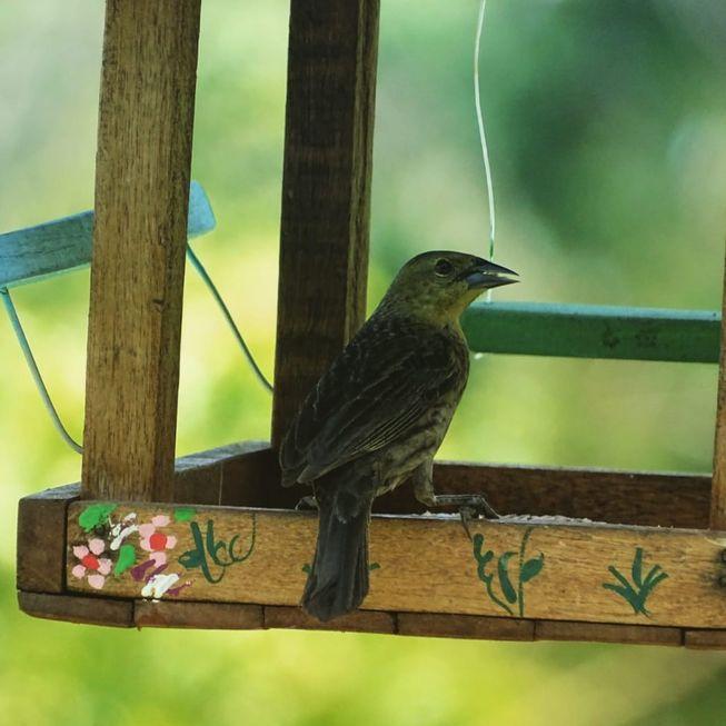Crianças aprendem a fazer comedouro para aves