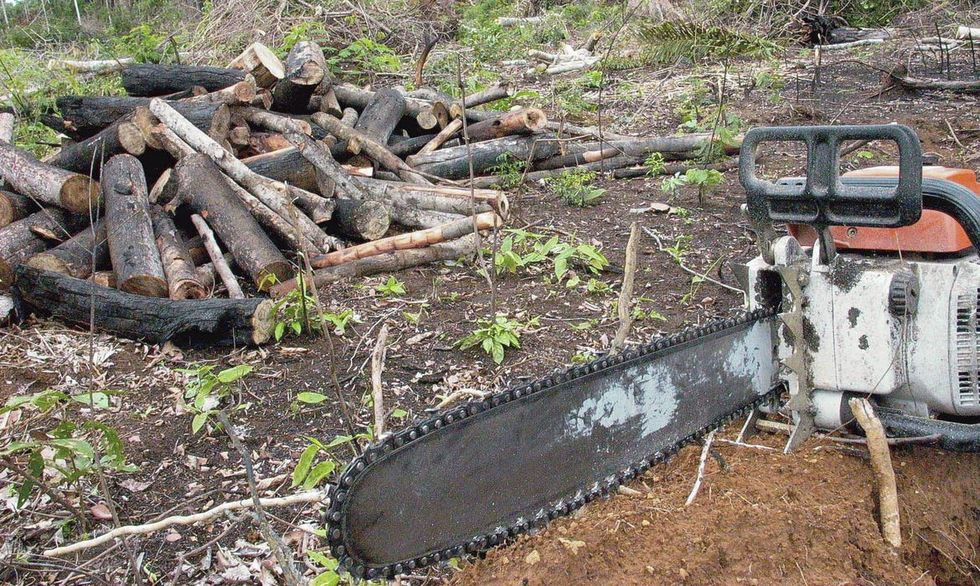 Mourão admite metas contra desmatamento