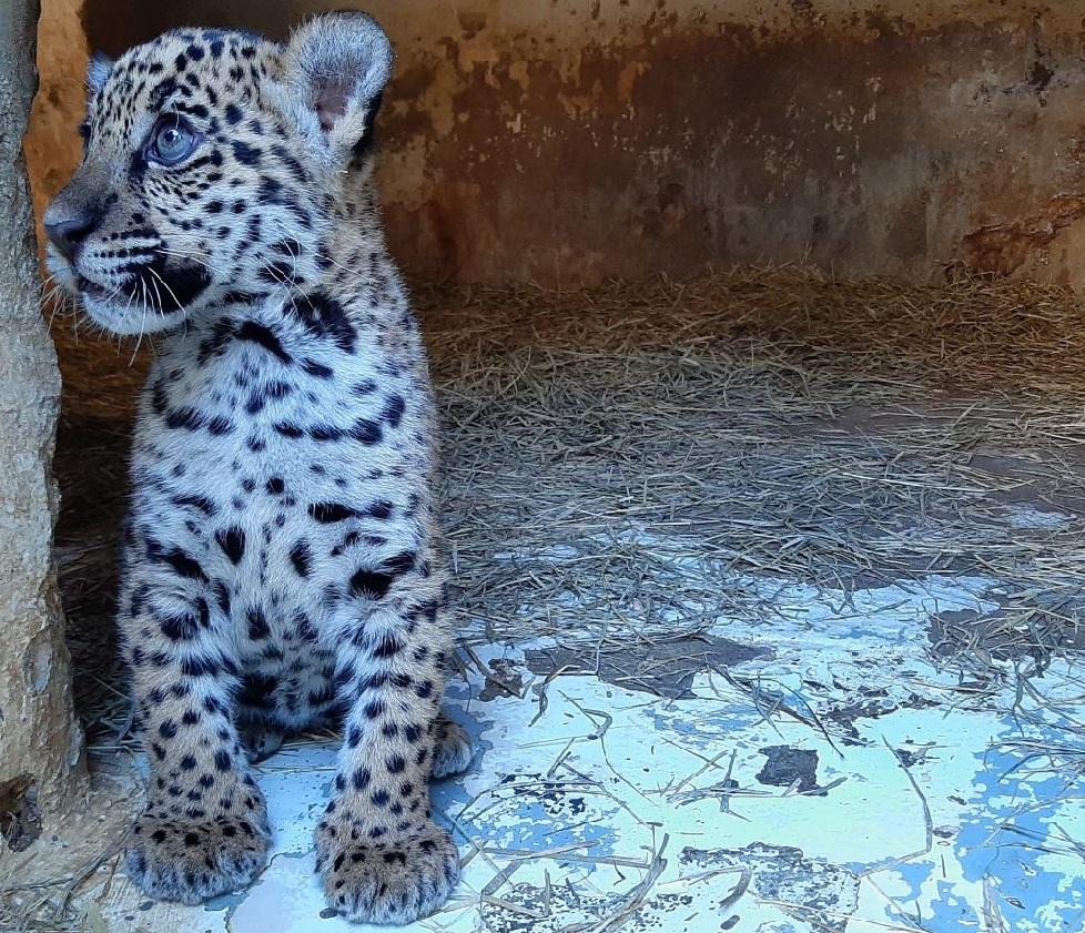 animais no zoo de Sorocaba