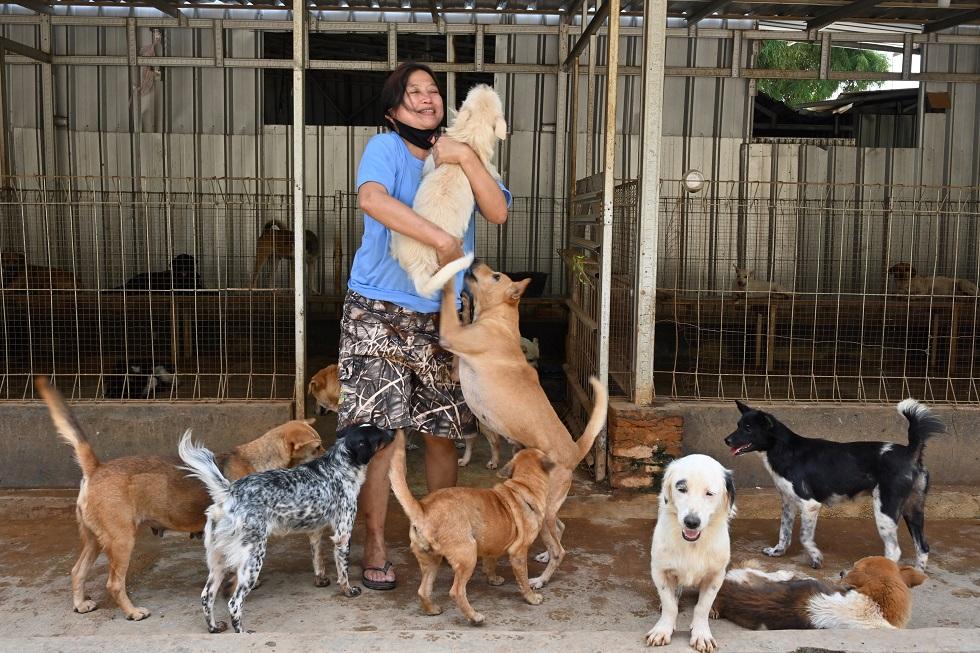 Médica resgata cães abandonados durante a pandemia