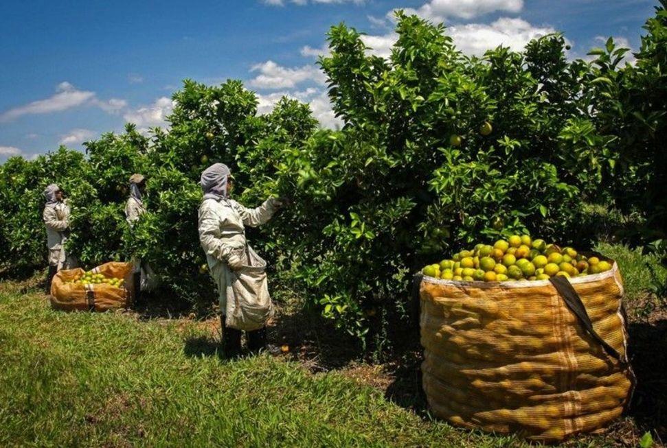 Agropecuária cria 86 mil empregos