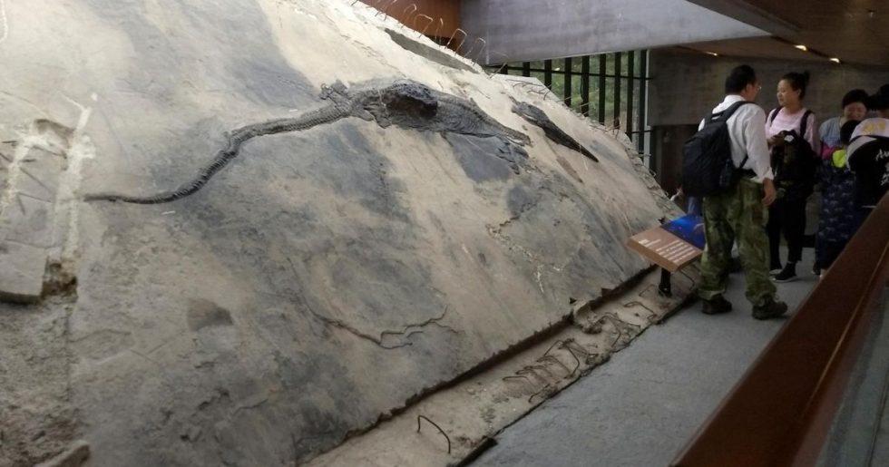 Fóssil de réptil marinho é encontrado no estômago de outro fóssil