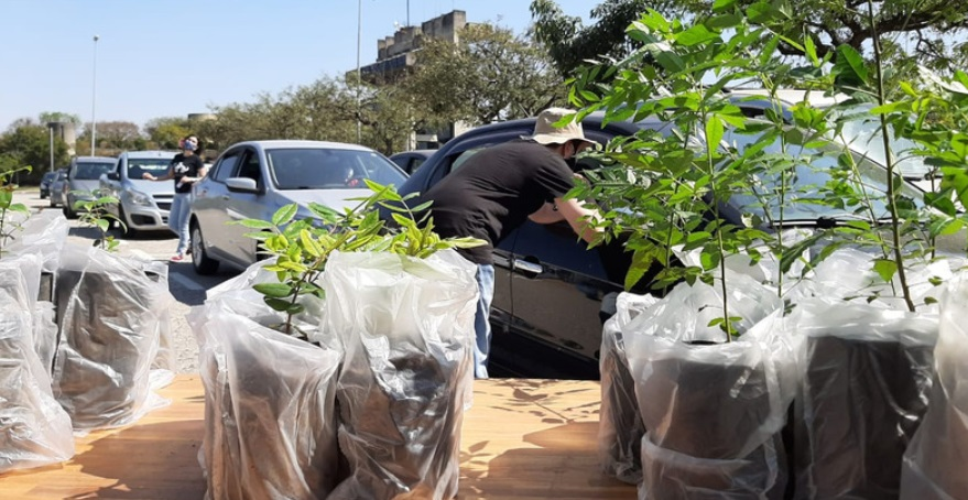 Mais de 2 mil mudas de árvores são doadas durante três dias em Sorocaba