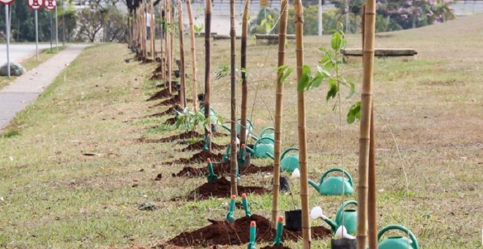 Jardim do Paço Municipal de Sorocaba ganha caminho de cerejeiras