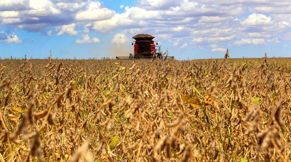 Soja deve se expandir em 5 milhões de hectares