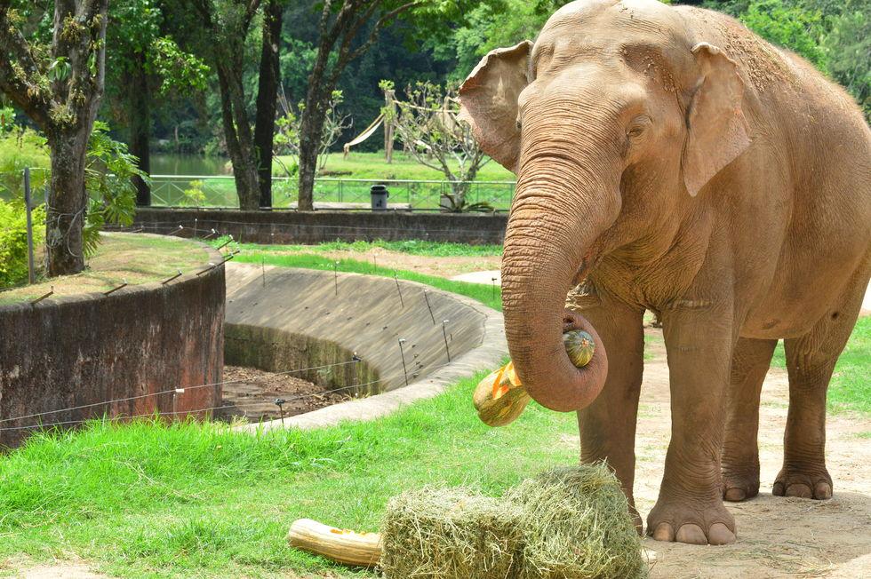 Animais ganham mimos no aniversário do zoo