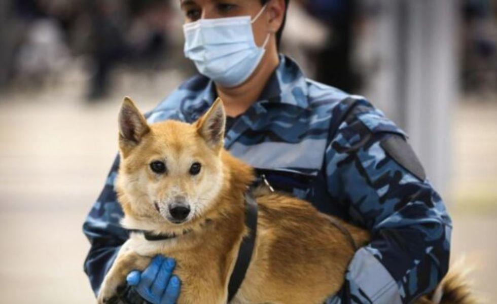 Cães são treinados para detectar pessoas com Covid