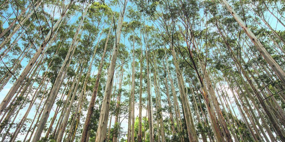 Investimento no setor florestal até 2023 chegará a R$ 35,5 bi