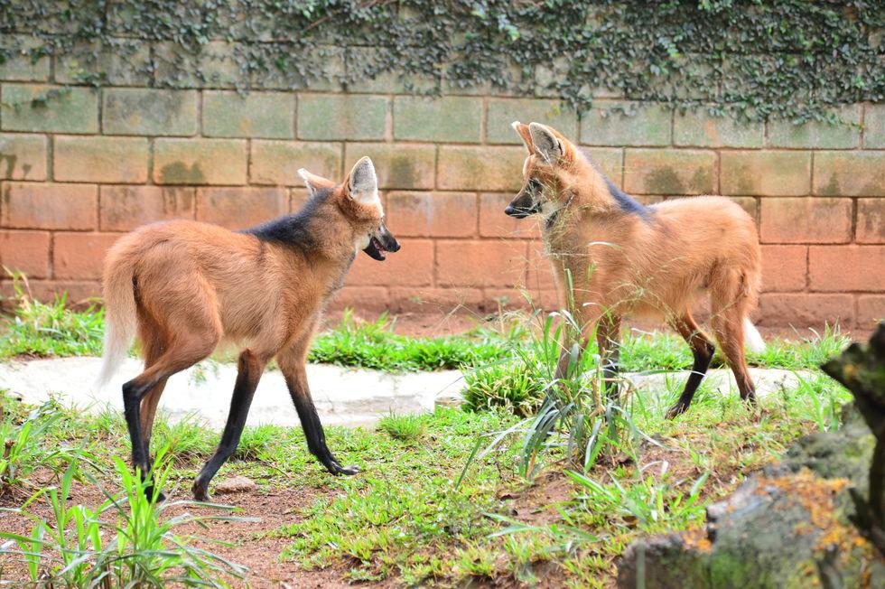 Zoo recebe visitantes, após sete meses