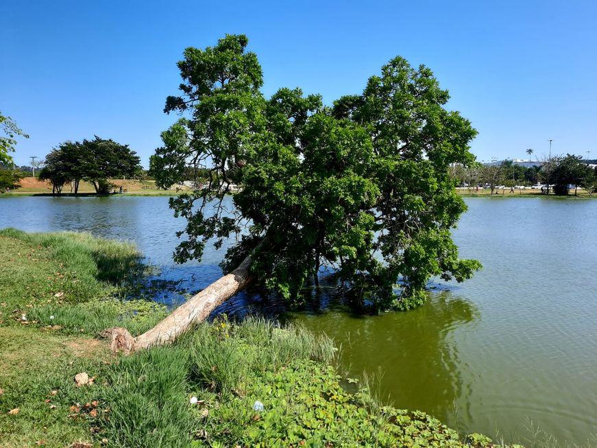 A árvore e o lago