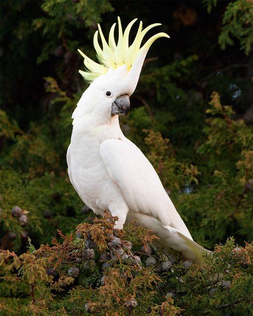 Criadores podem ter apenas aves exóticas