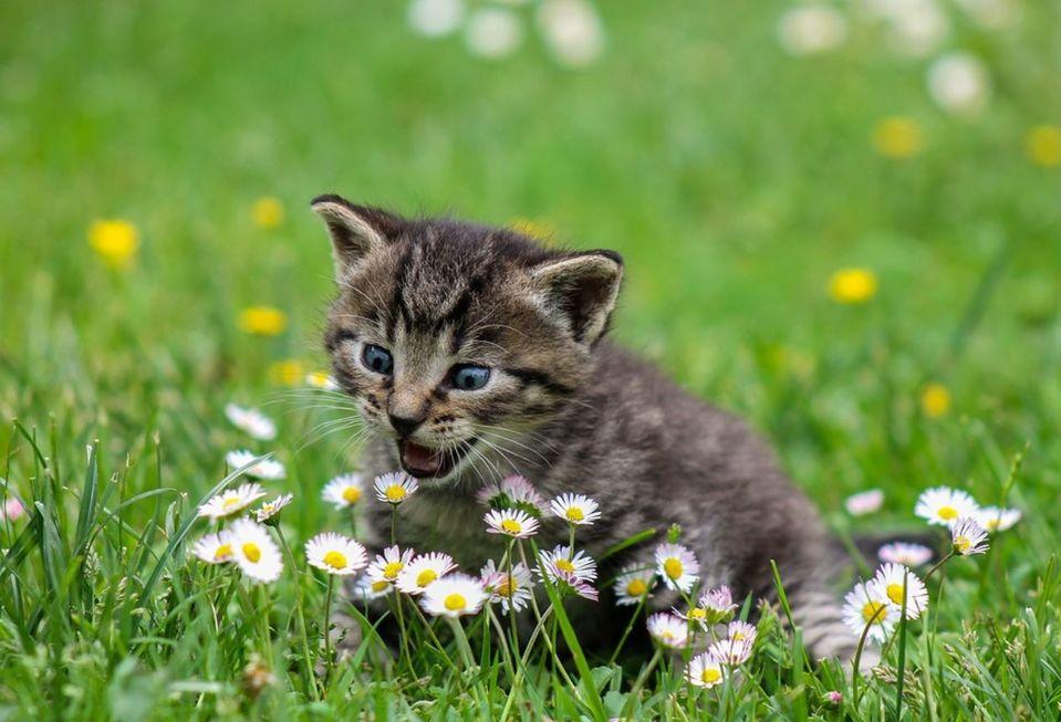 Primavera é época de coceira e alergia, mas tem solução