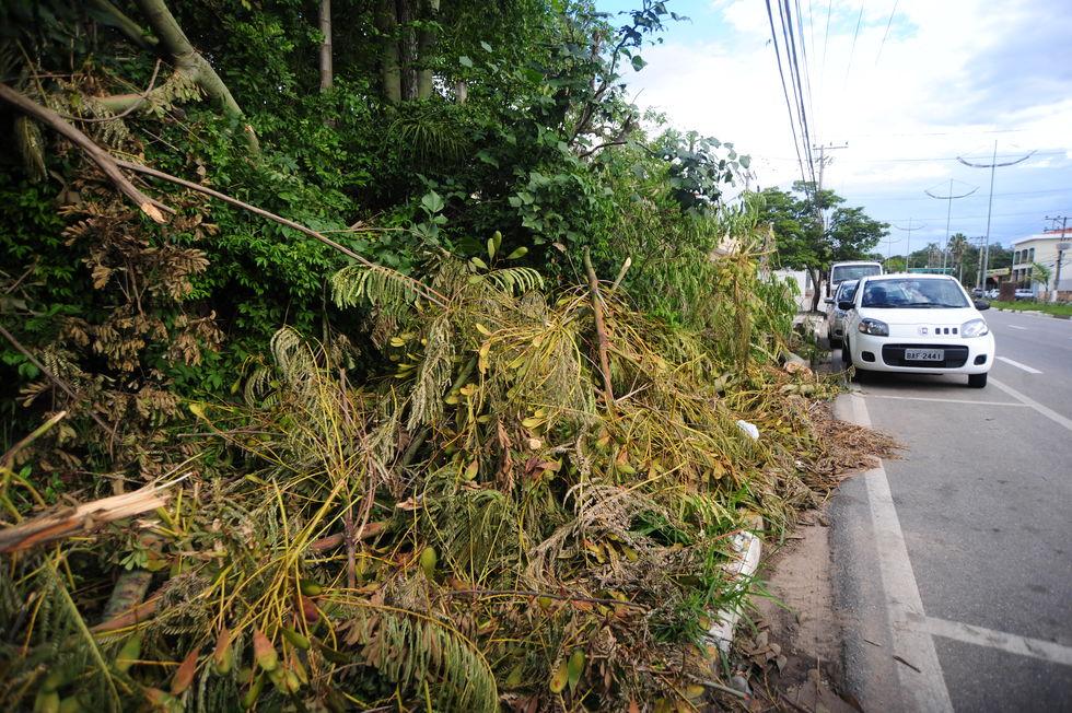 Árvores caídas bloqueiam calçadas em Votorantim