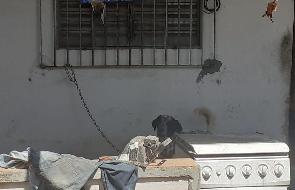 Cães são resgatados e levados ao Abrigo
