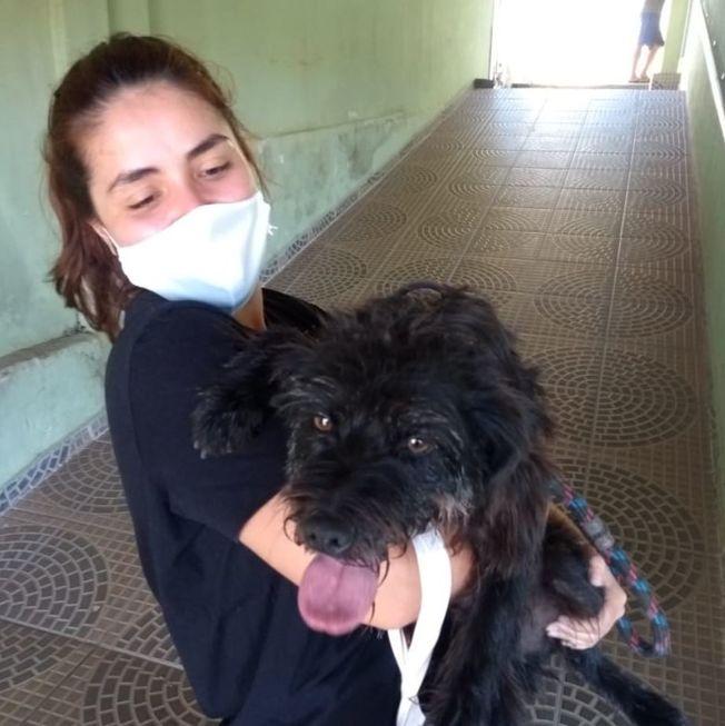 Denúncias de maus-tratos a animais passa de mil casos