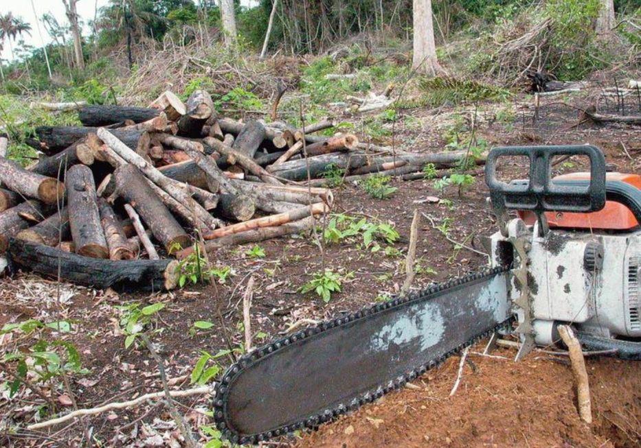 Pauta ambiental do Brasil é prioridade para a UE