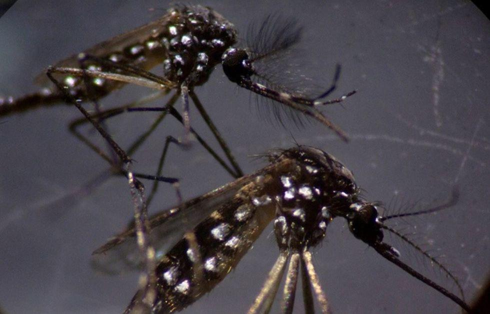 Saúde incentiva o combate ao mosquito Aedes aegypti