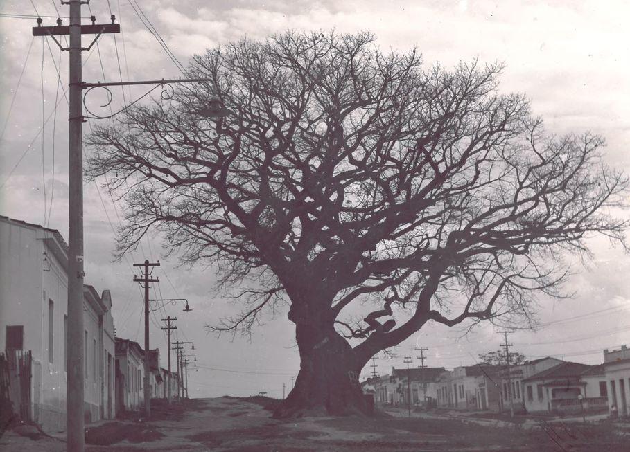 #TBT: Árvore Grande, a história de um bairro