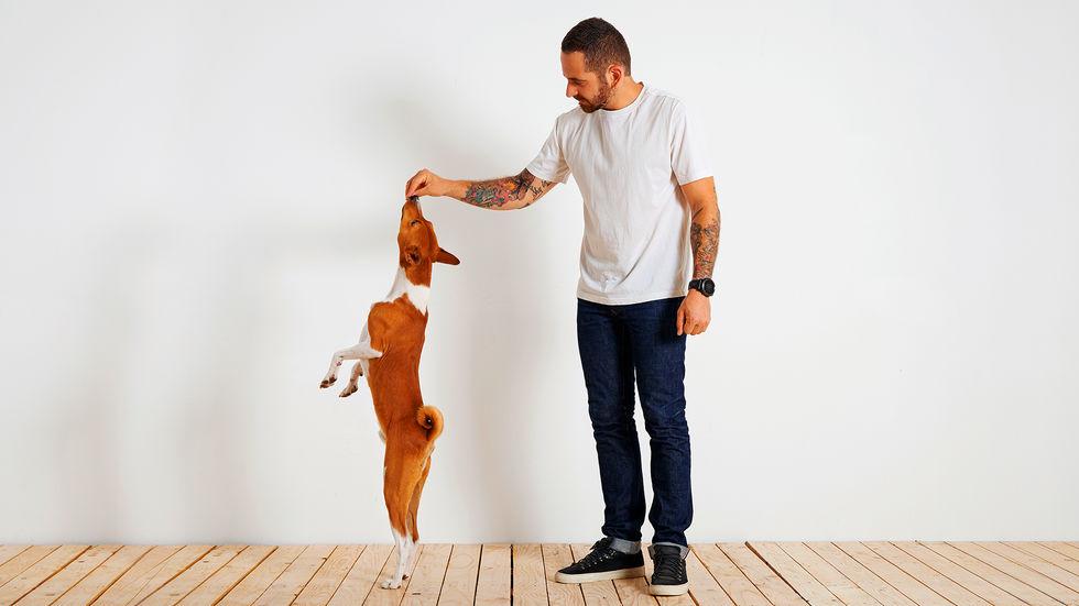 Cães socializados tendem a ter melhor qualidade de vida