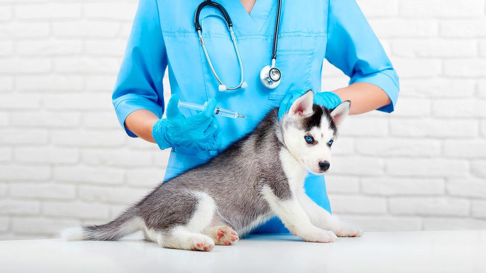 Calendário de vacinação deve começar aos 45 dias de vida