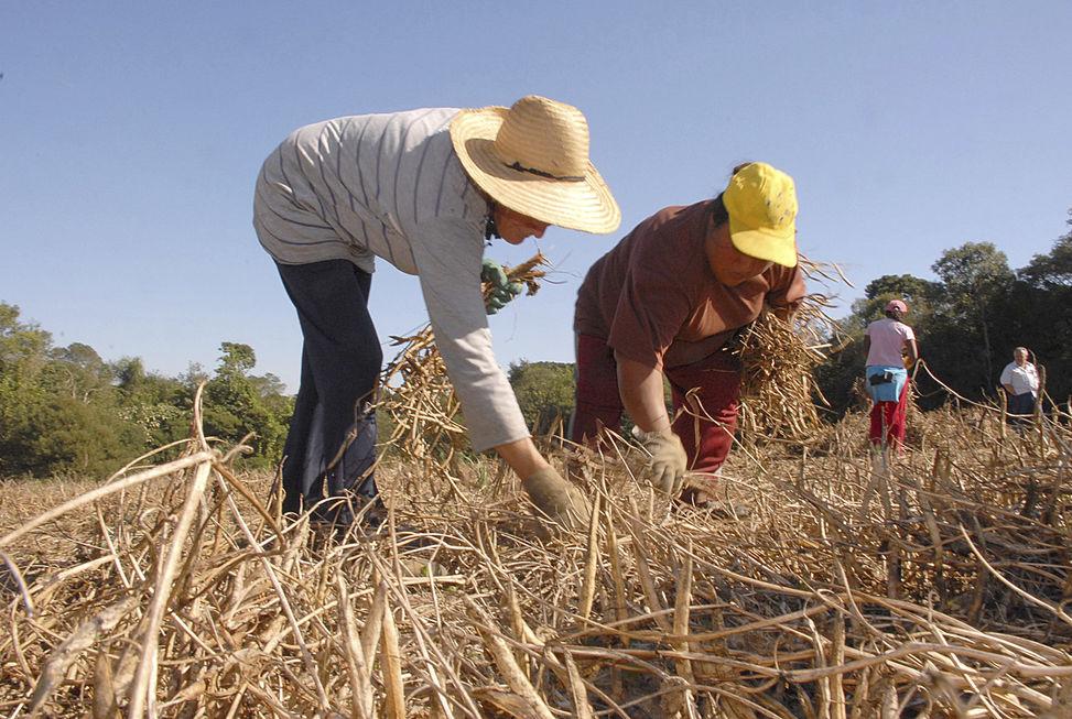 Contratação do crédito rural bate R$ 147 bi