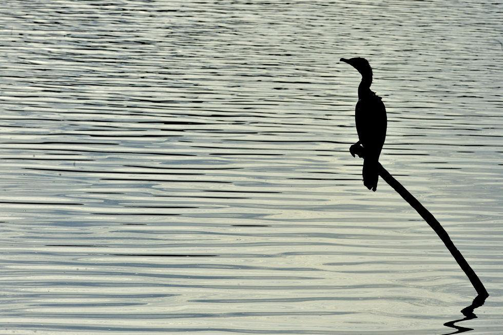 Dia da Água terá comemoração on-line