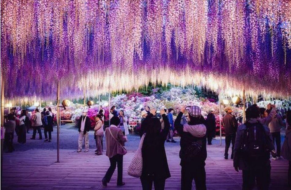 Explore os encantos do 'paraíso das flores'