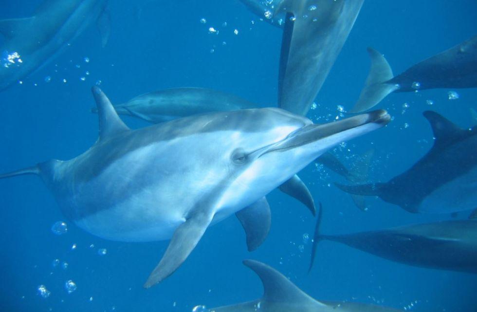 Golfinhos encantam os humanos